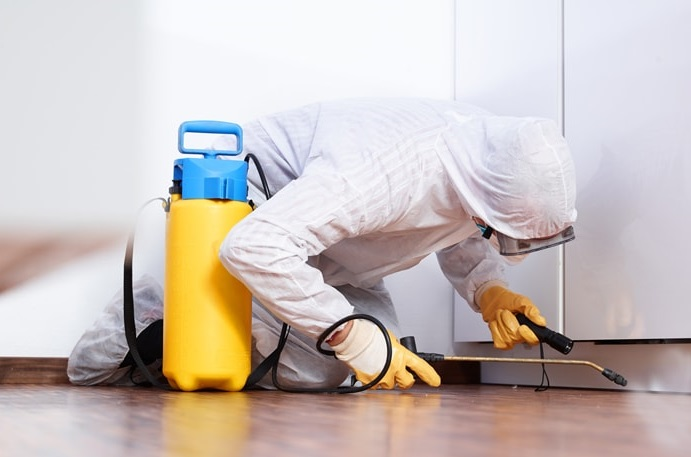 Fundamental points to consider when selecting the very best pest control services