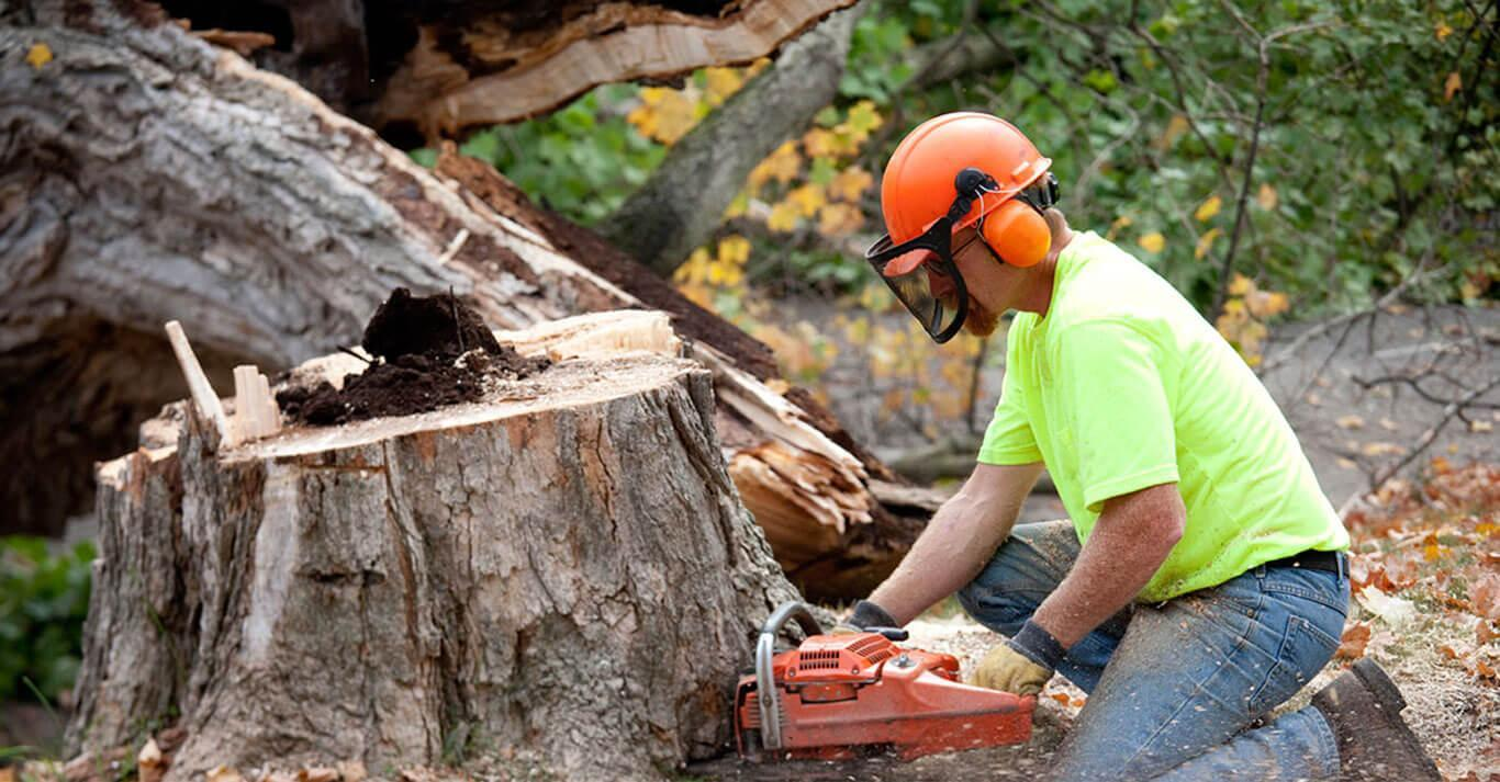 What Can You Expect From Tree Services?