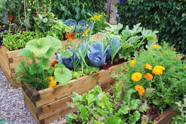How To Create An Easy Retic System For Your Home Veggie Garden