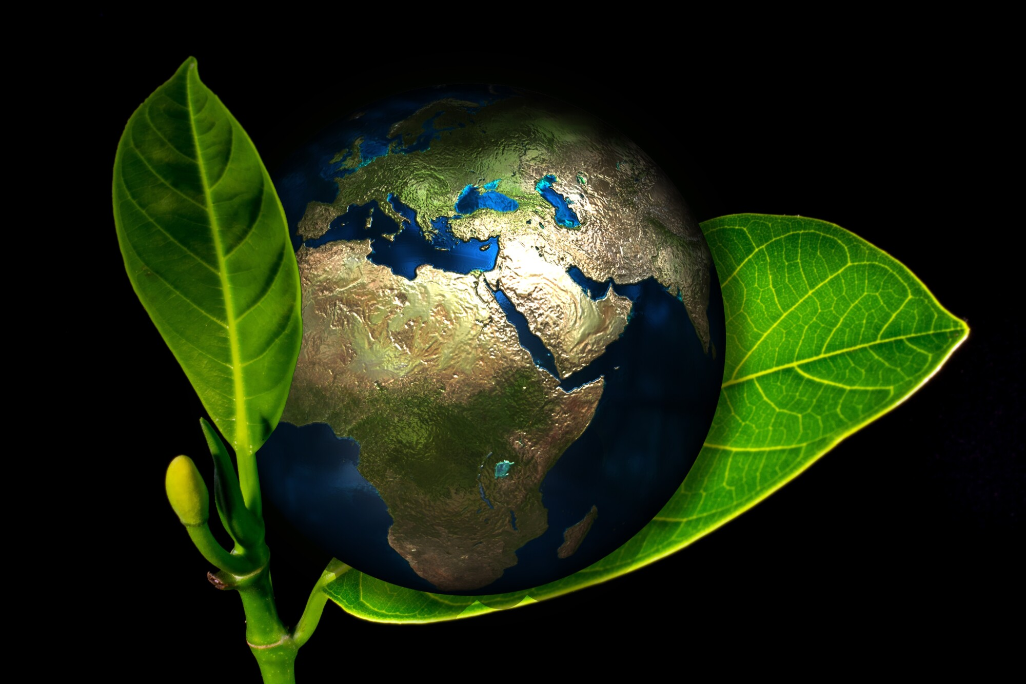 5 Easy Earth Friendly Changes You Can Make This Month