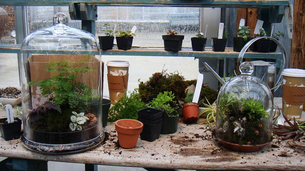 Highlights of growing terrarium plants, an overview